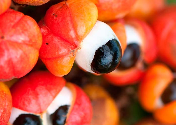 Benefits of Guarana