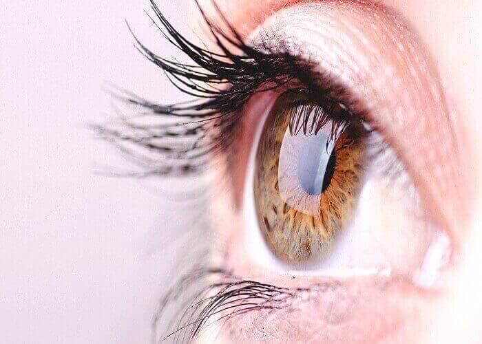 Eye Bugs